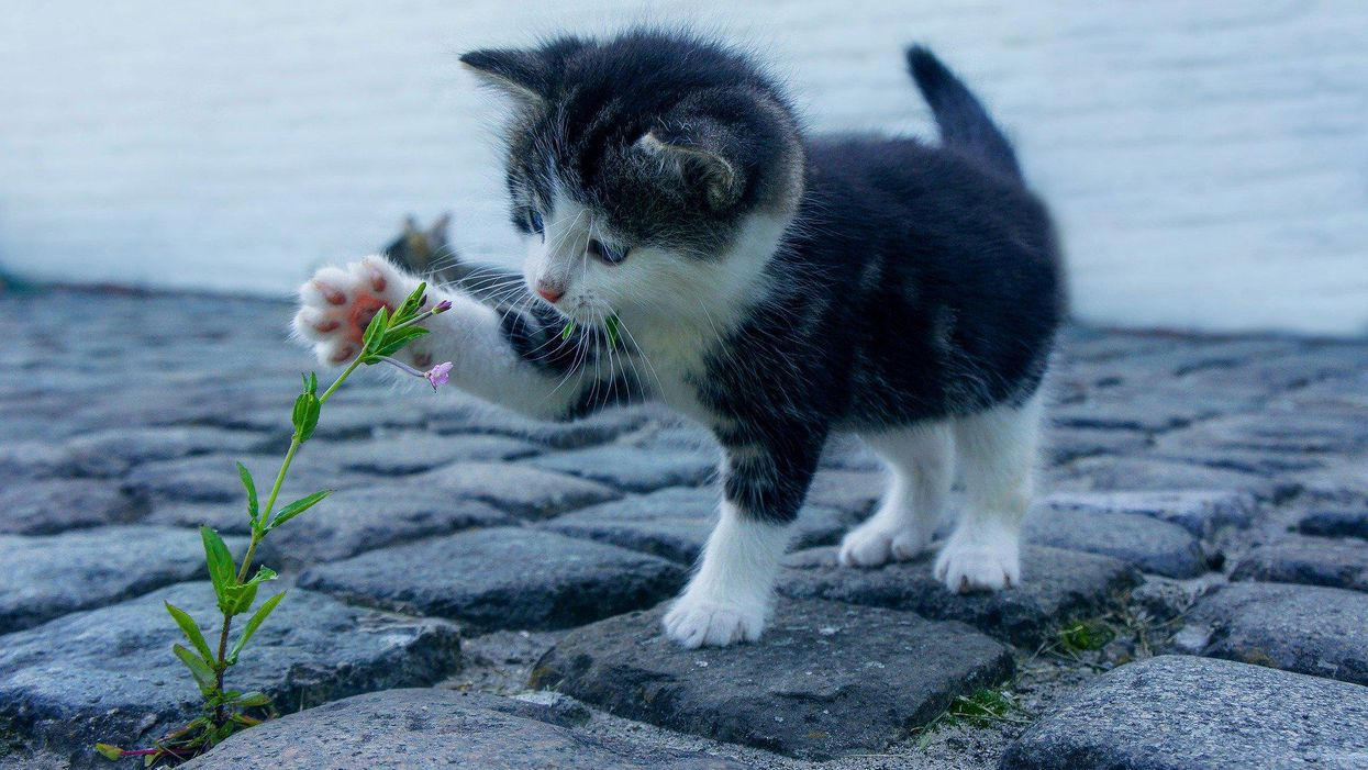 Catnip is for both pleasure and protection, according to a new study