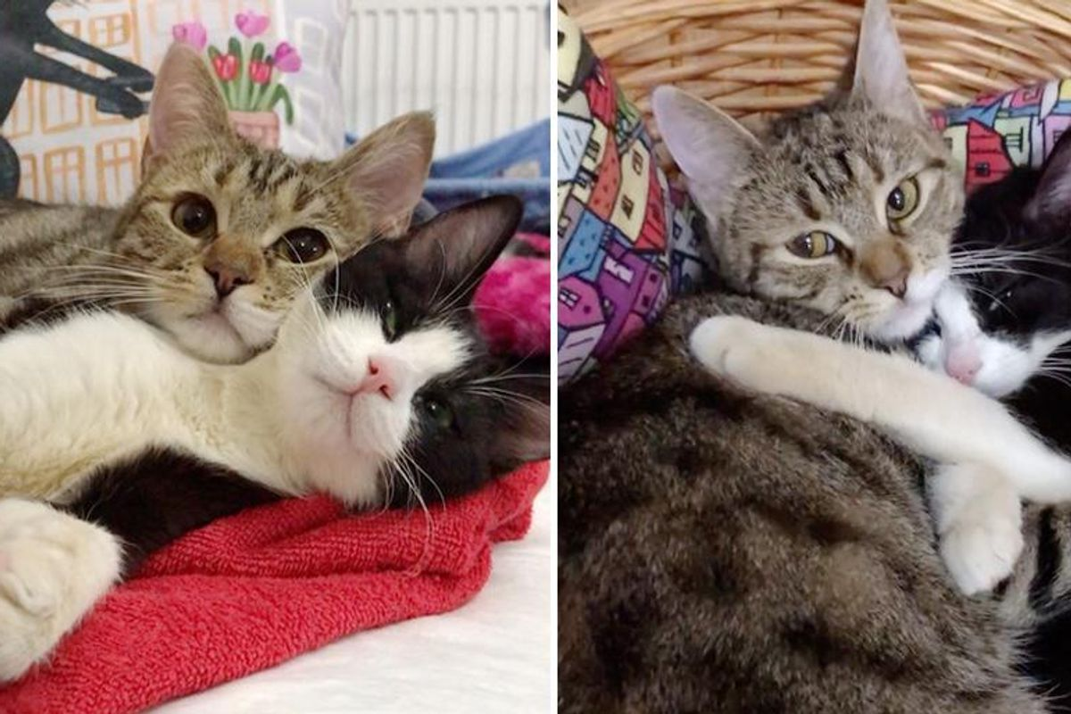 Cat with 3 Paws Takes Paralyzed Kitten Under Her Wing and Their Friendship Blossoms