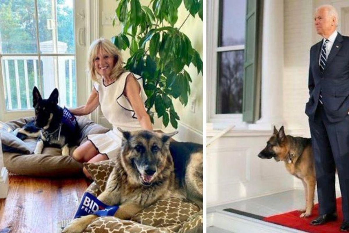 First Doggos Champ and Major have officially moved into the White House