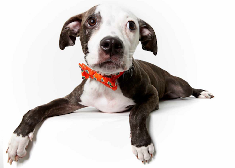 Adorable Humane Society Of New York Adoption Portraits by Richard Phibbs