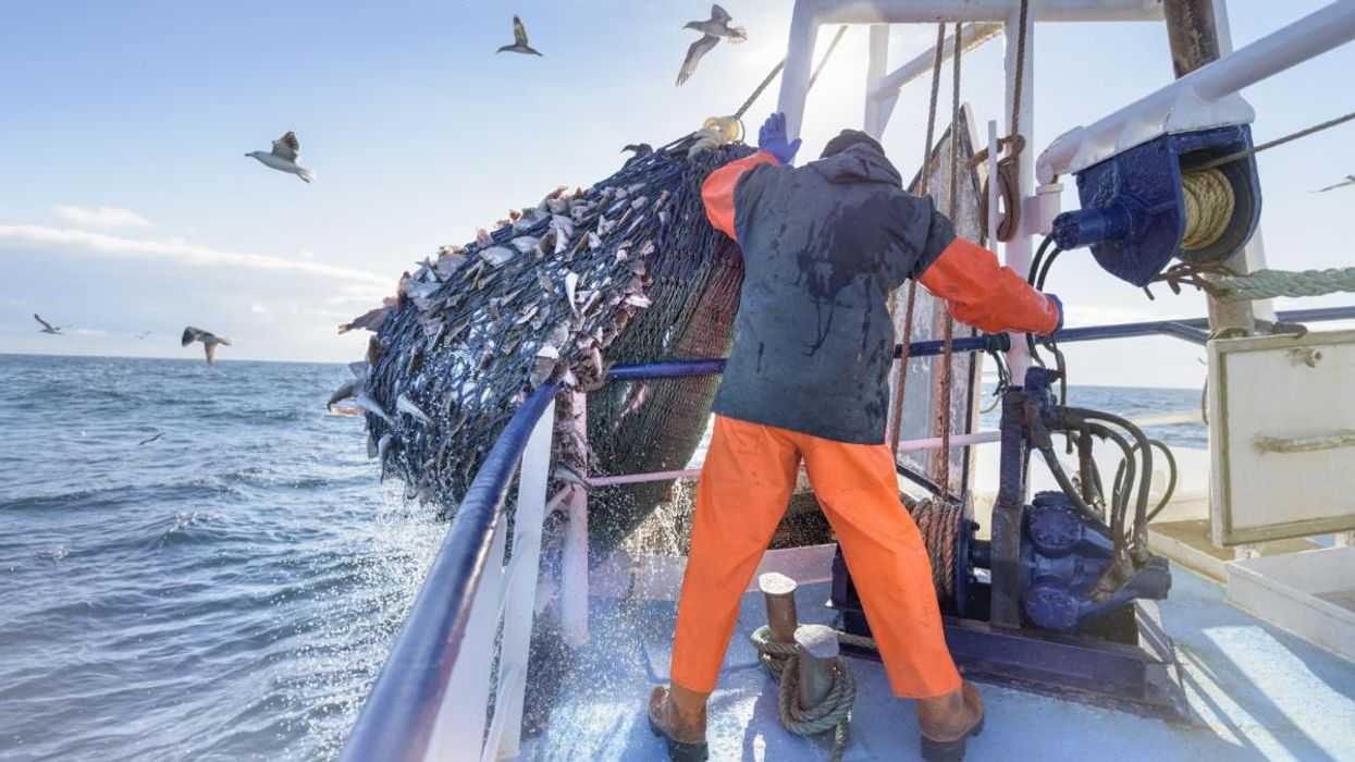 UK Considers Banning Bottom-Trawlers in Marine Protected Areas