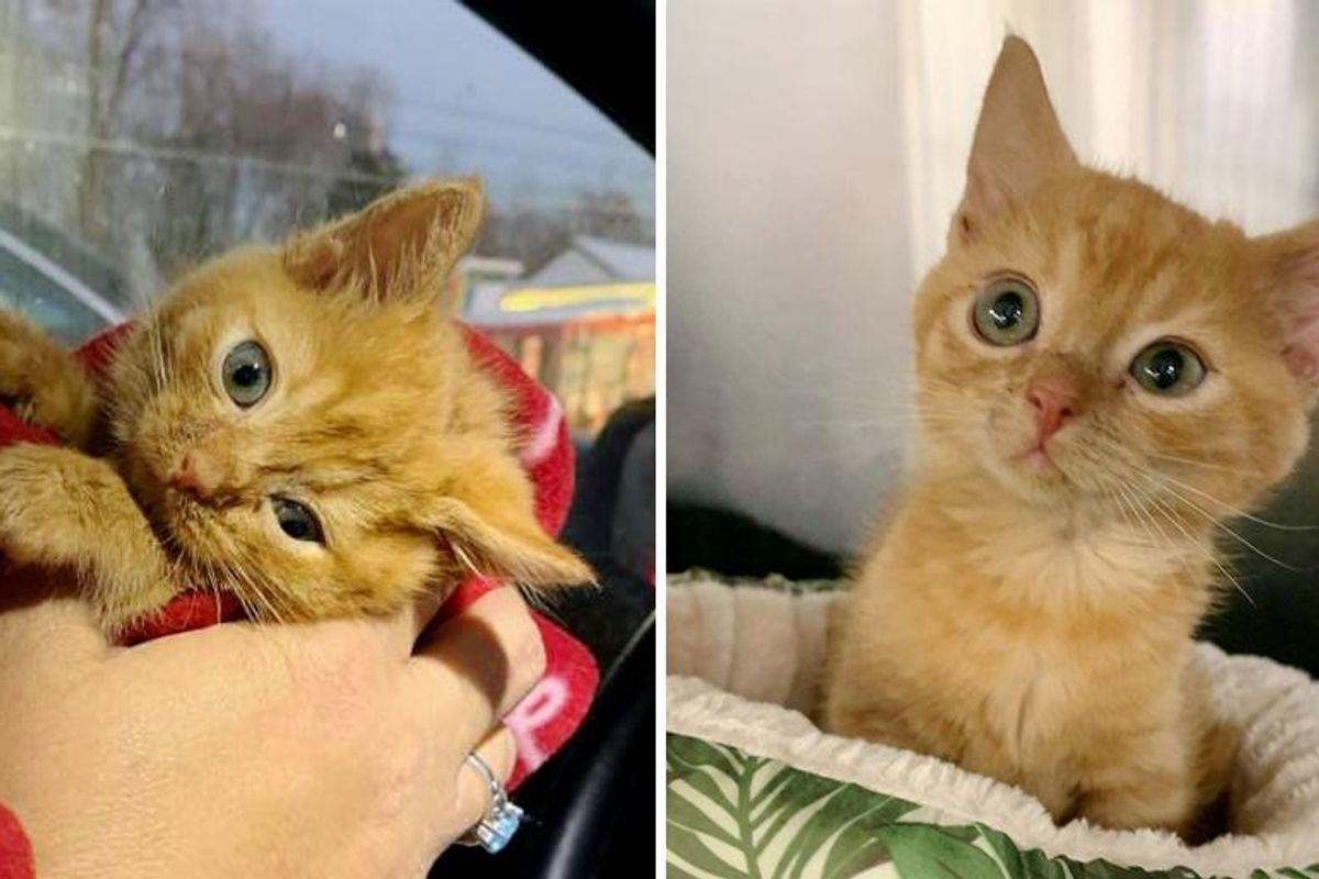 Kitten with Head Tilt and Strong Purr Found His Way into the Heart of Family
