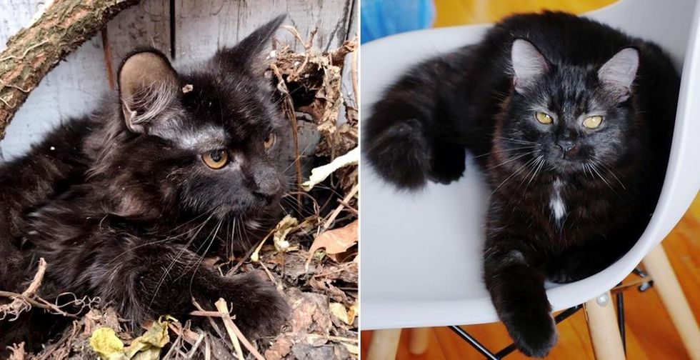 Kitten Found Hiding Under Leaves, Transforms into Confident, Gorgeous Cat with Help of Kind People