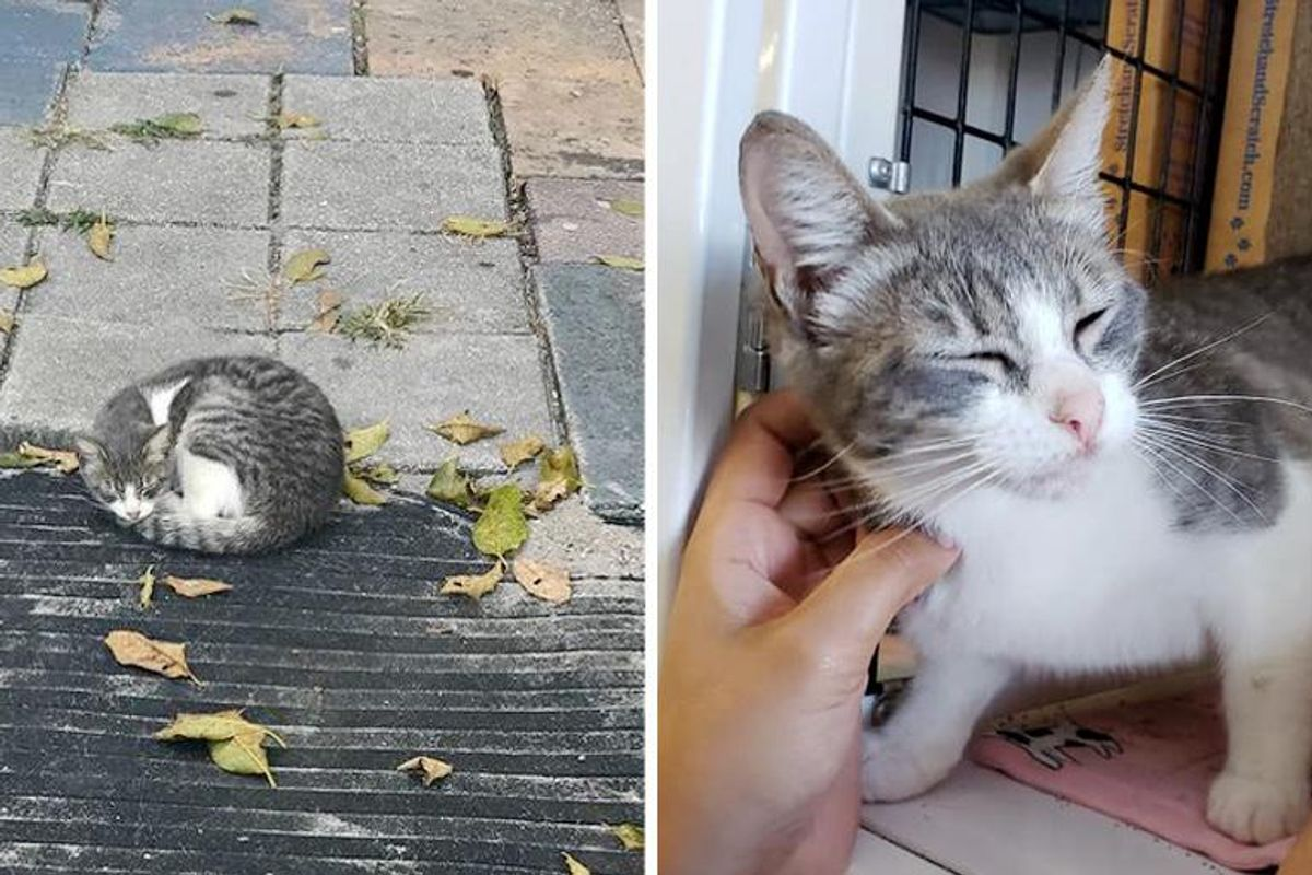 Kitten Found Sleeping Outside a House, is so Happy to Be Off the Streets and Hopes for Dream Home