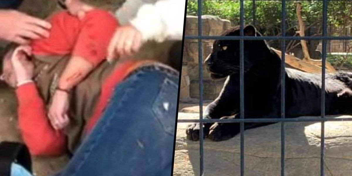 Zoo Confirms Jaguar Who Attacked Woman Taking a Selfie Won't Be Put Down