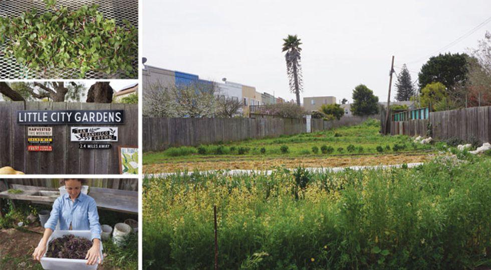 Little City Gardens / San Francisco, CA