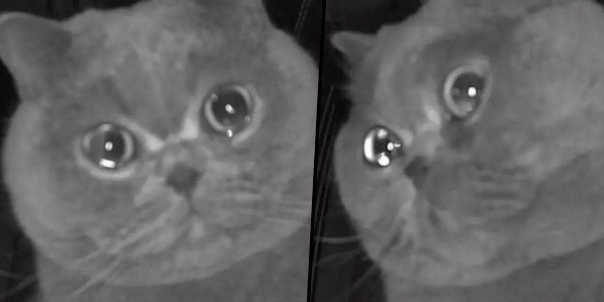 Pet Cat 'Cries' Into Security Camera After Owner Leaves It Home Alone