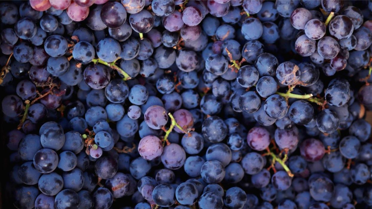 Grapes are 'edible sunscreen' according to a new study