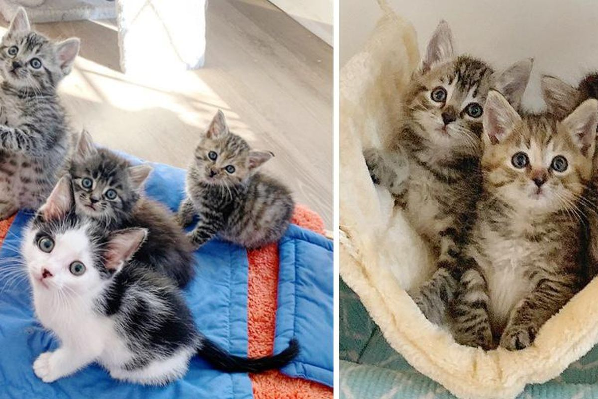 Kittens Rescued from the Cold, Befriended Cat that Needed a Buddy, Now They Have Their Dream Come True