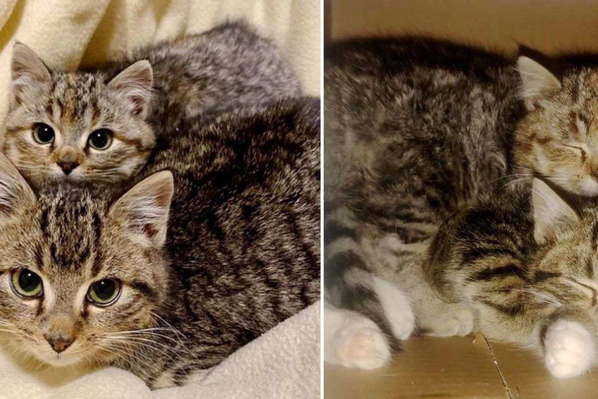 Kittens Found Playing in Family's Backyard on Snowy Day, Turn Out to Be Sweetest Pair