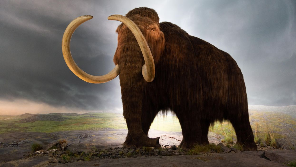 Record for oldest DNA ever sequenced broken by mammoth remains