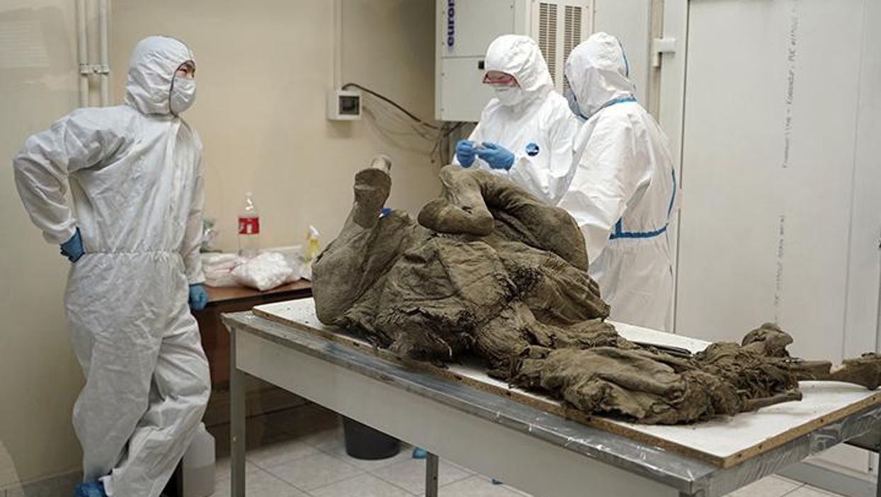 Russian scientists study prehistoric animal viruses from the permafrost
