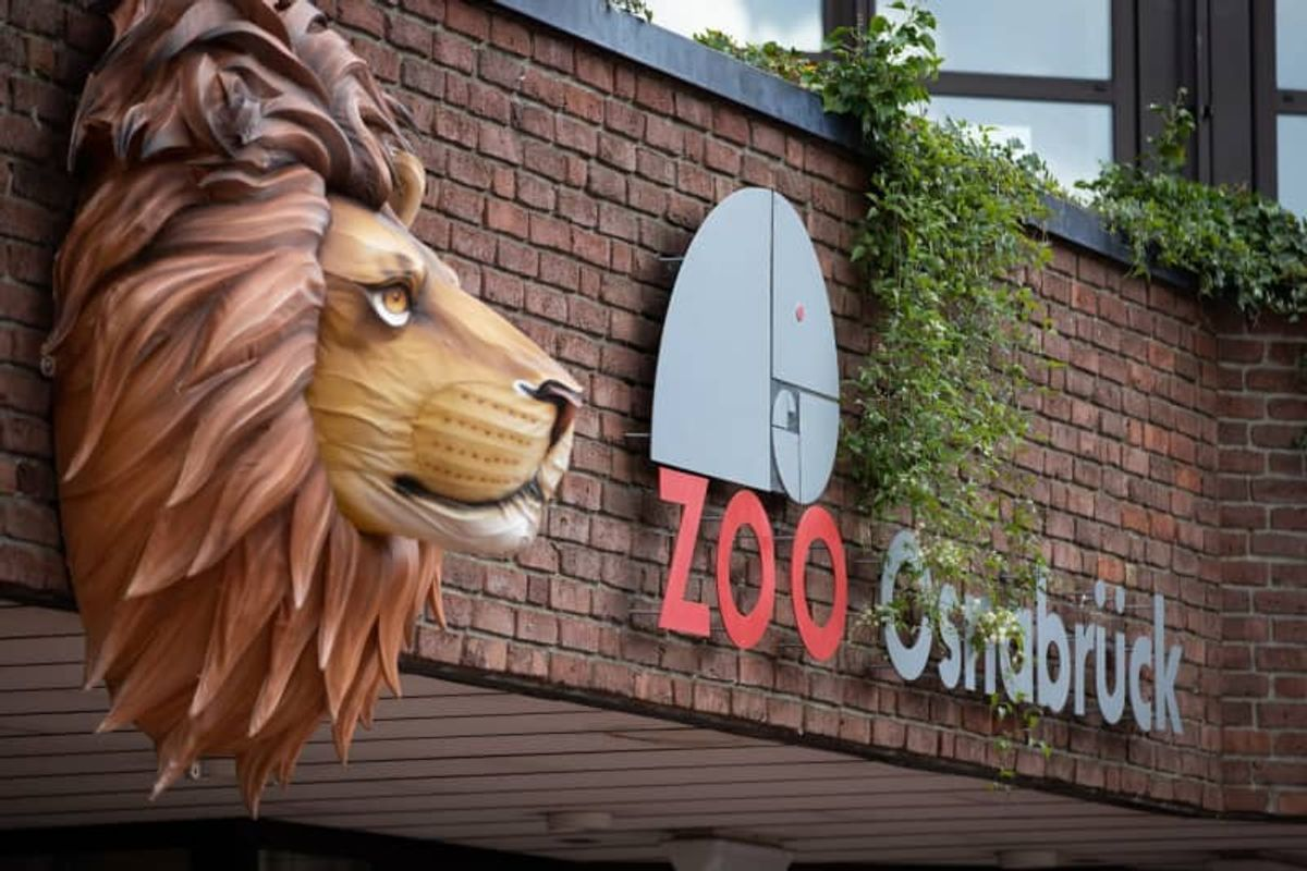 Lion attacks keeper in German zoo