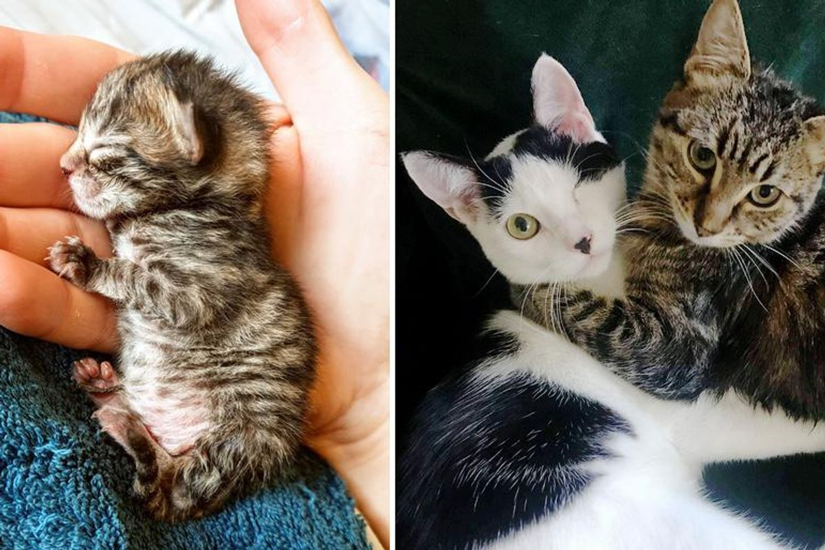 Kitten Bounces Back from Being So Tiny and Becomes Sweetest Friends with One-eyed Cat