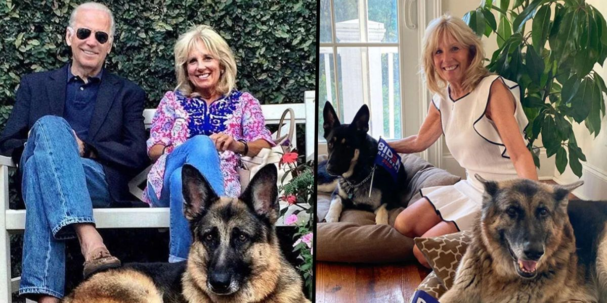 President Joe Biden's Dog Champ is Mocked and Called Ugly On Newsmax