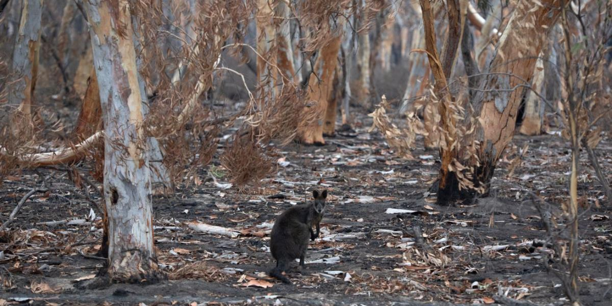 As Extreme Weather Events Increase, What Are the Risks to Wildlife?