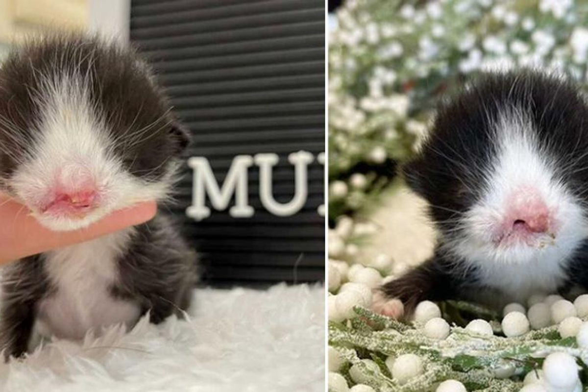 Kitten with Sweet Face is Given Fighting Chance and Determined to Thrive and Live Full Life