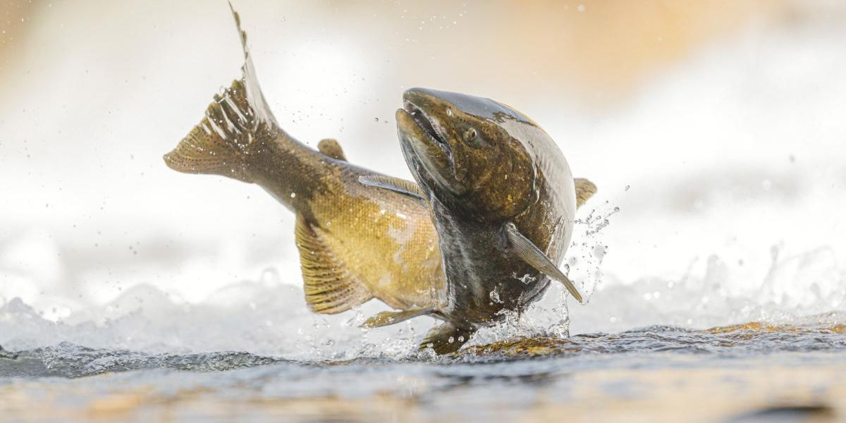 One Third of Freshwater Fish Face Extinction, New Report Warns
