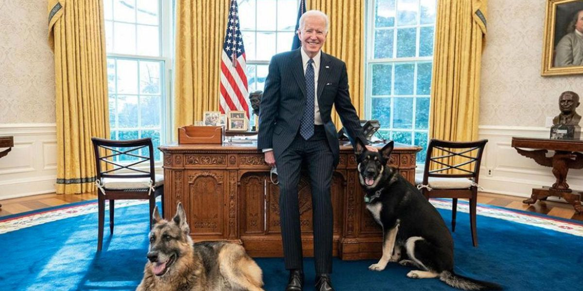Joe Biden Shares Photo of the First Dogs Hanging Out in the Oval Office