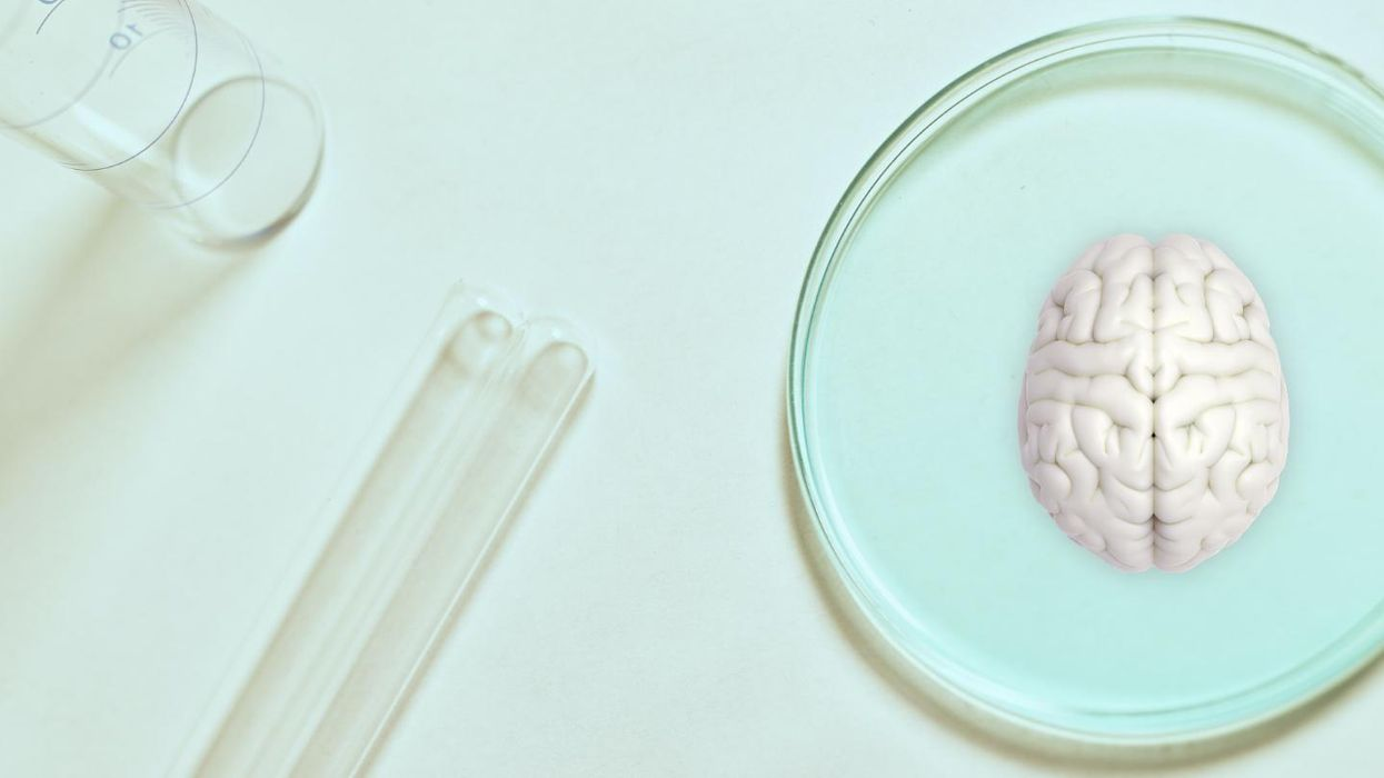Lab-grown brain organoids mature like real infant brains