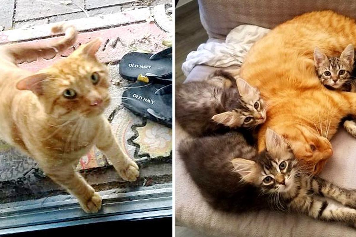 Cat with Airplane Ears Showed Up in Backyard, Now Cares for Every Foster Kitten that Comes Through the Door