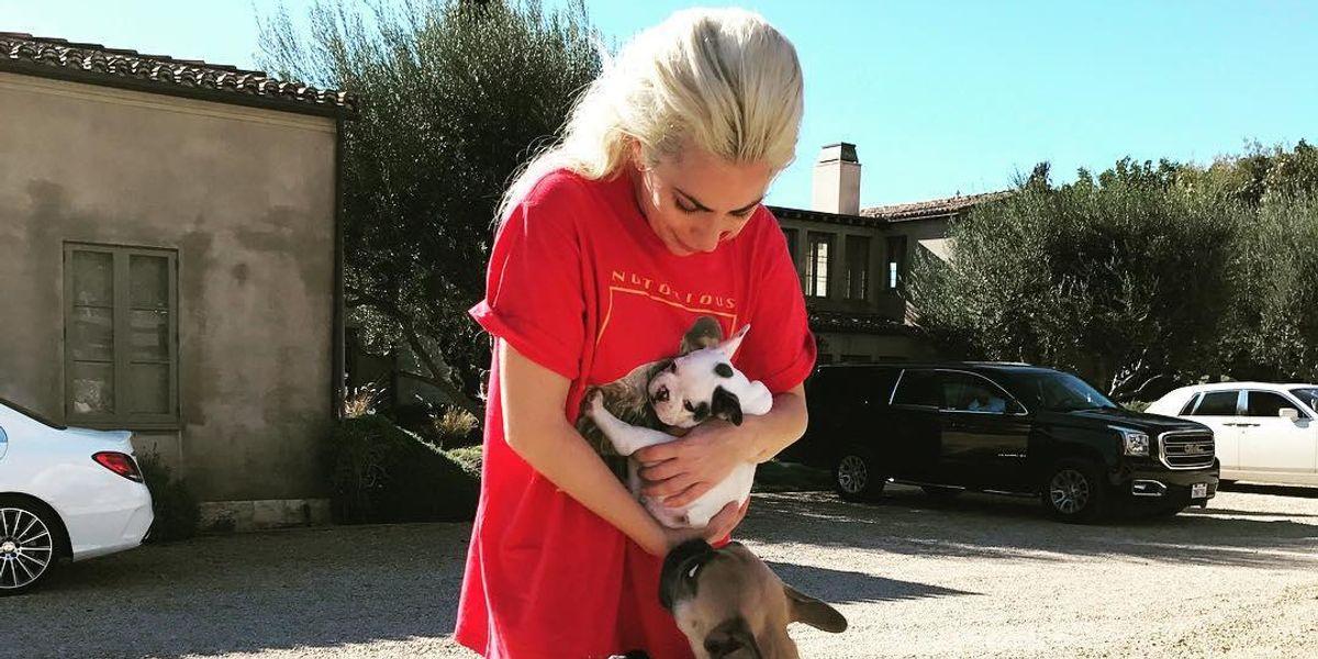 Lady Gaga's Dog Walker Shot, Dogs Stolen