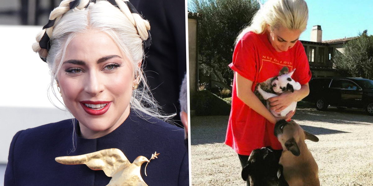 Lady Gaga Offers $500k Reward After Her Dog Walker Is Shot and Dogs Are Stolen