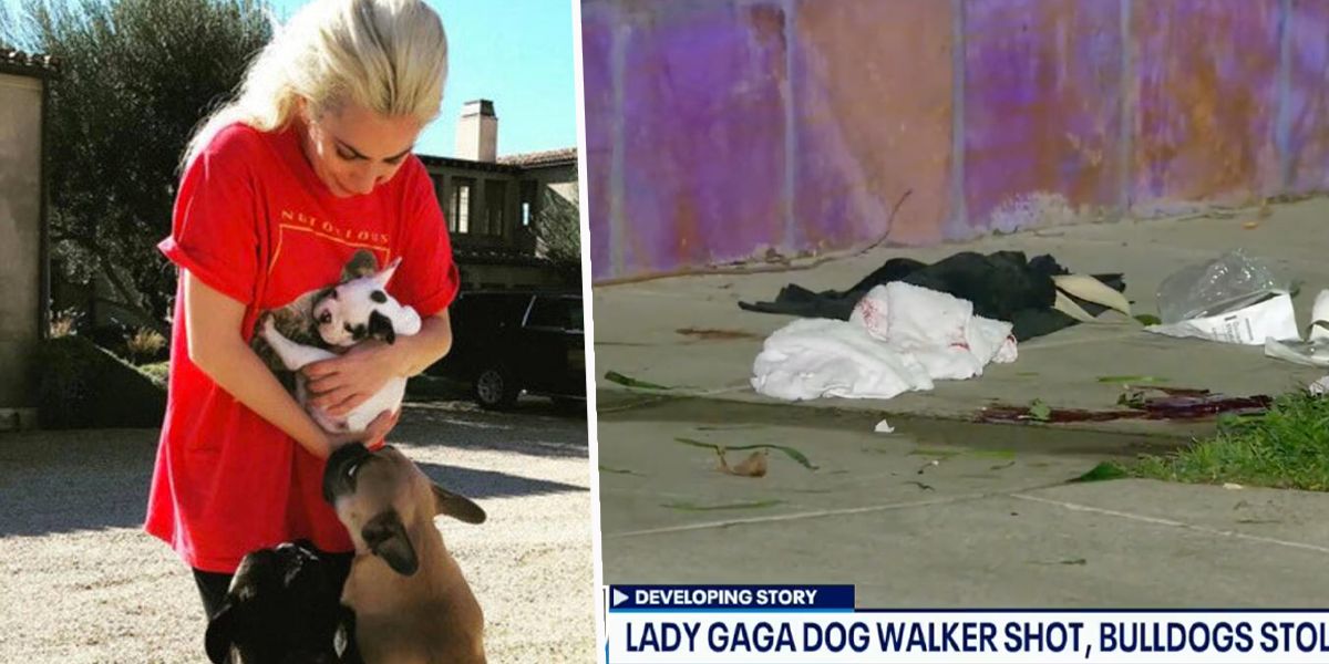 Shocking Footage Shows Horrifying Moment Lady Gaga's Dogs Are Stolen
