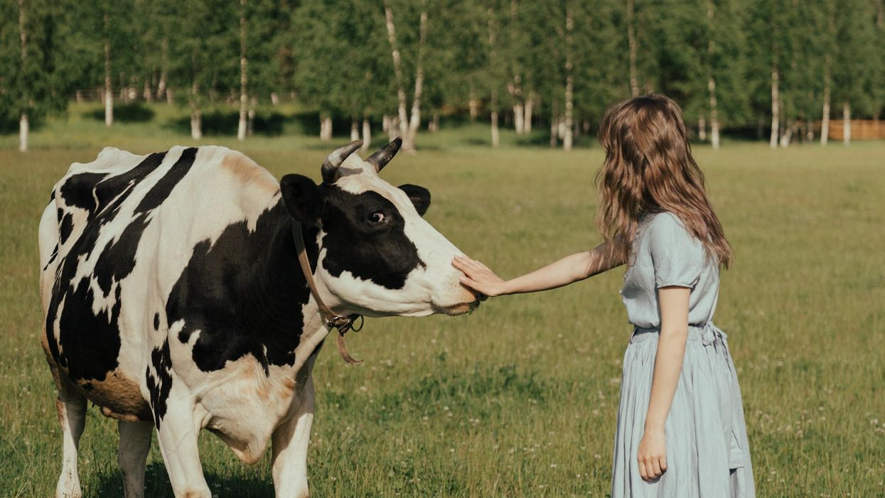 New wellness center lets guests cuddle with cows
