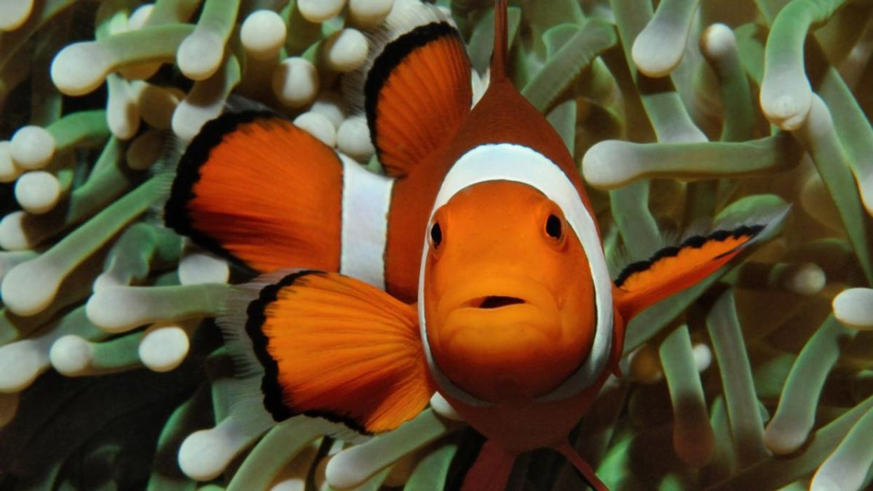 Human Noise Pollution Is Harming Ocean Creatures