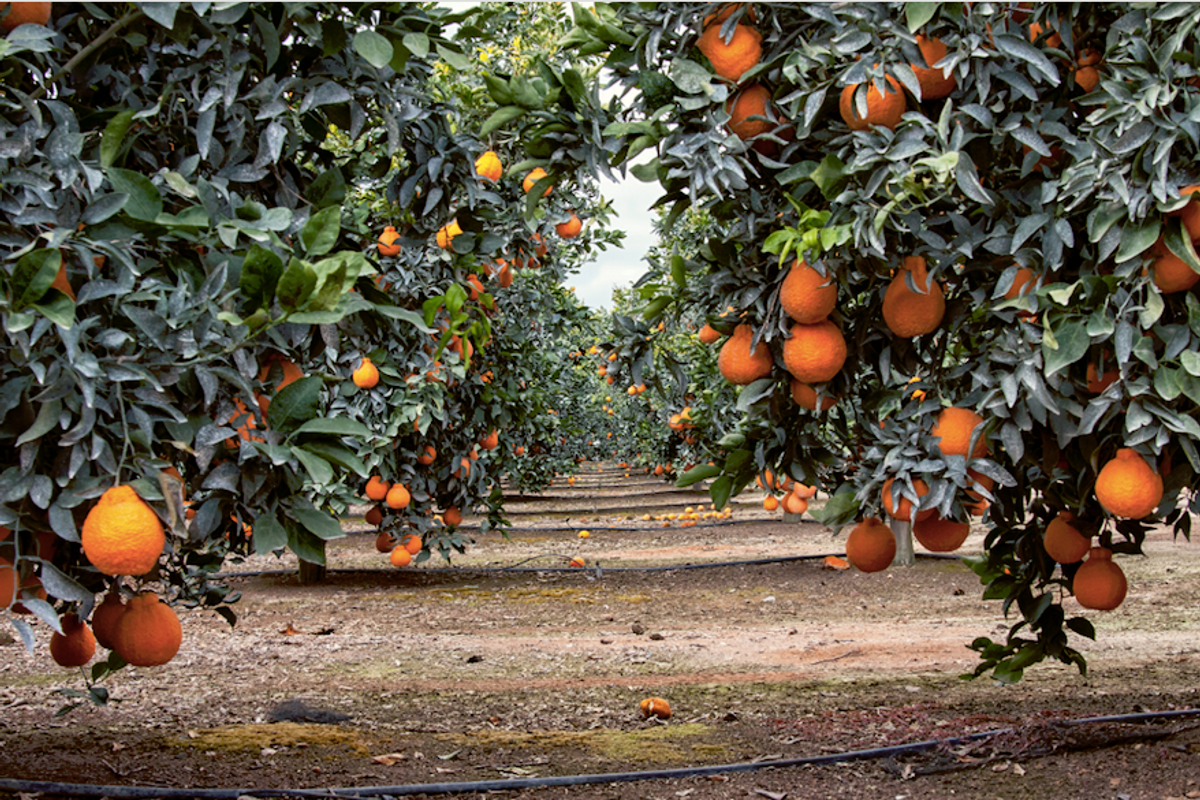 Here's what it takes to grow one of the most loved fruits in the world