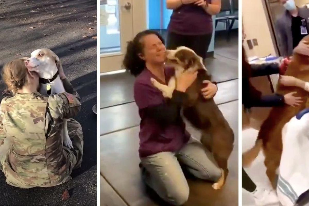 These images of Doggos being reunited with their favorite humans are a wave of pure joy