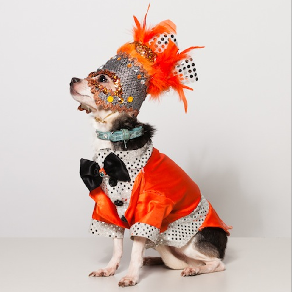 Dog Couture, Our New Favorite Thing
