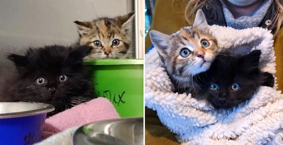 Kittens Found Near Park as Inseparable Duo, Blossom into Beautiful Cats As They Find Dream Home Together