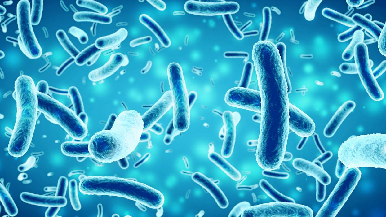 The bacteria in our guts can tell time