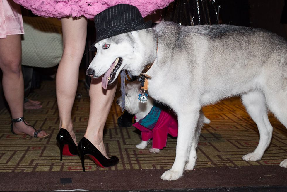 Woof! Scenes From a Dog Fashion Show