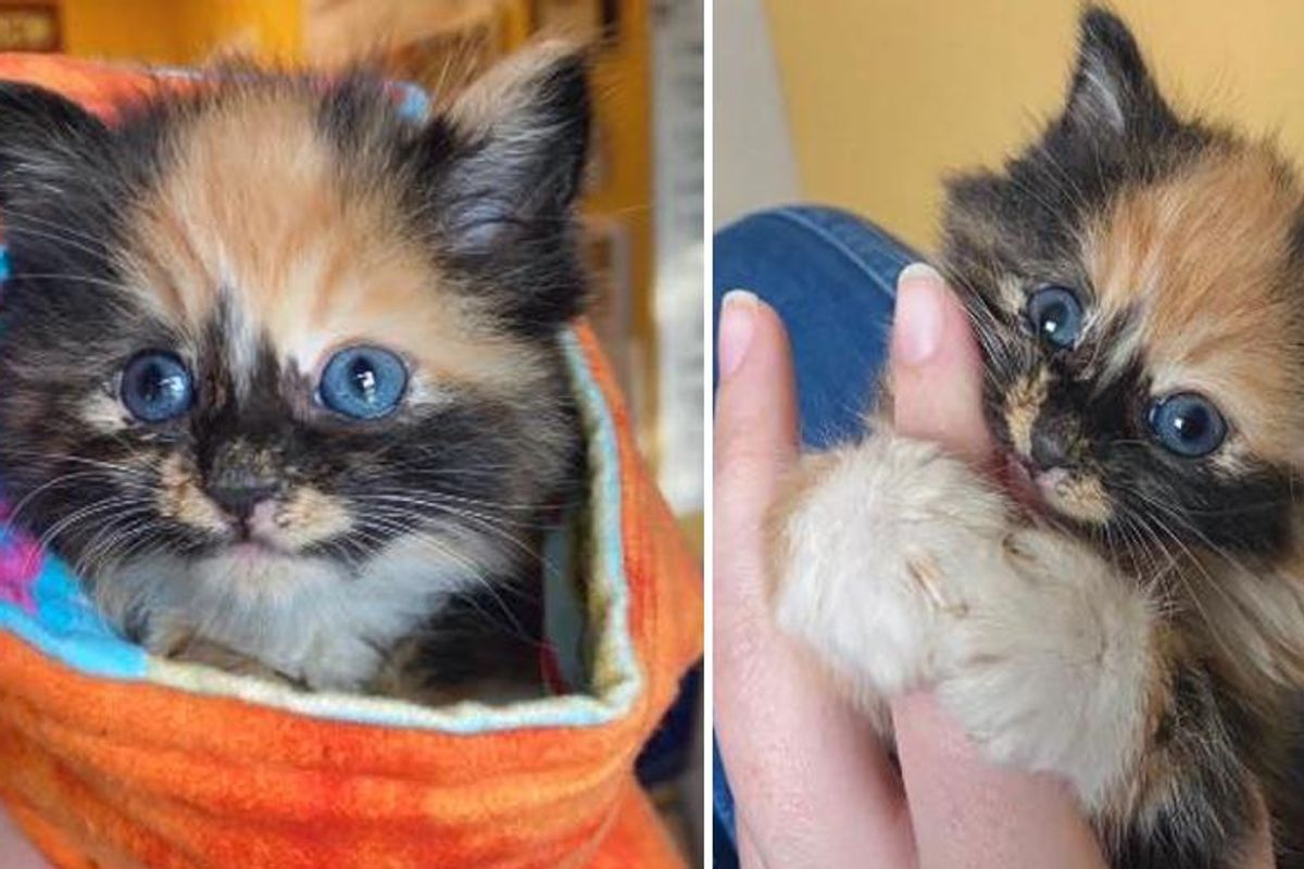 Kitten Determined to Win Over the Heart of Pup After Being Found Outside By Herself