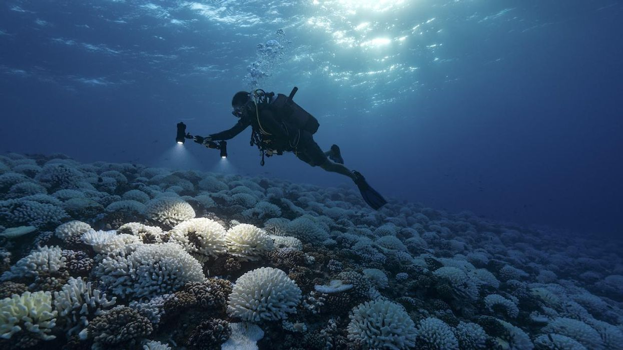 Scientists Discover Why Coral Reefs Are Turning White, Informing Restoration Possibilities