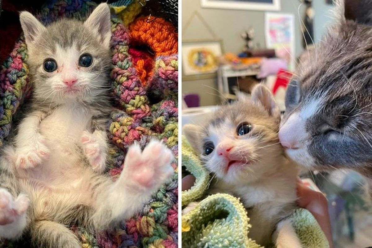 Palm-sized Kitten Learns to Sit and Stand Again with Support from Cats Around Him