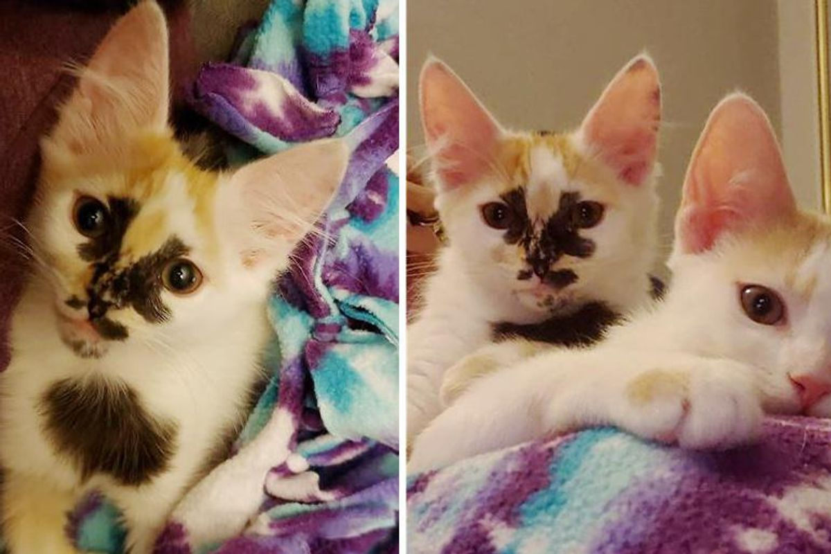 Kitten with Beautiful Markings Bounces Back and Thrives with Her Sister, Now They Have Their Dream Come True