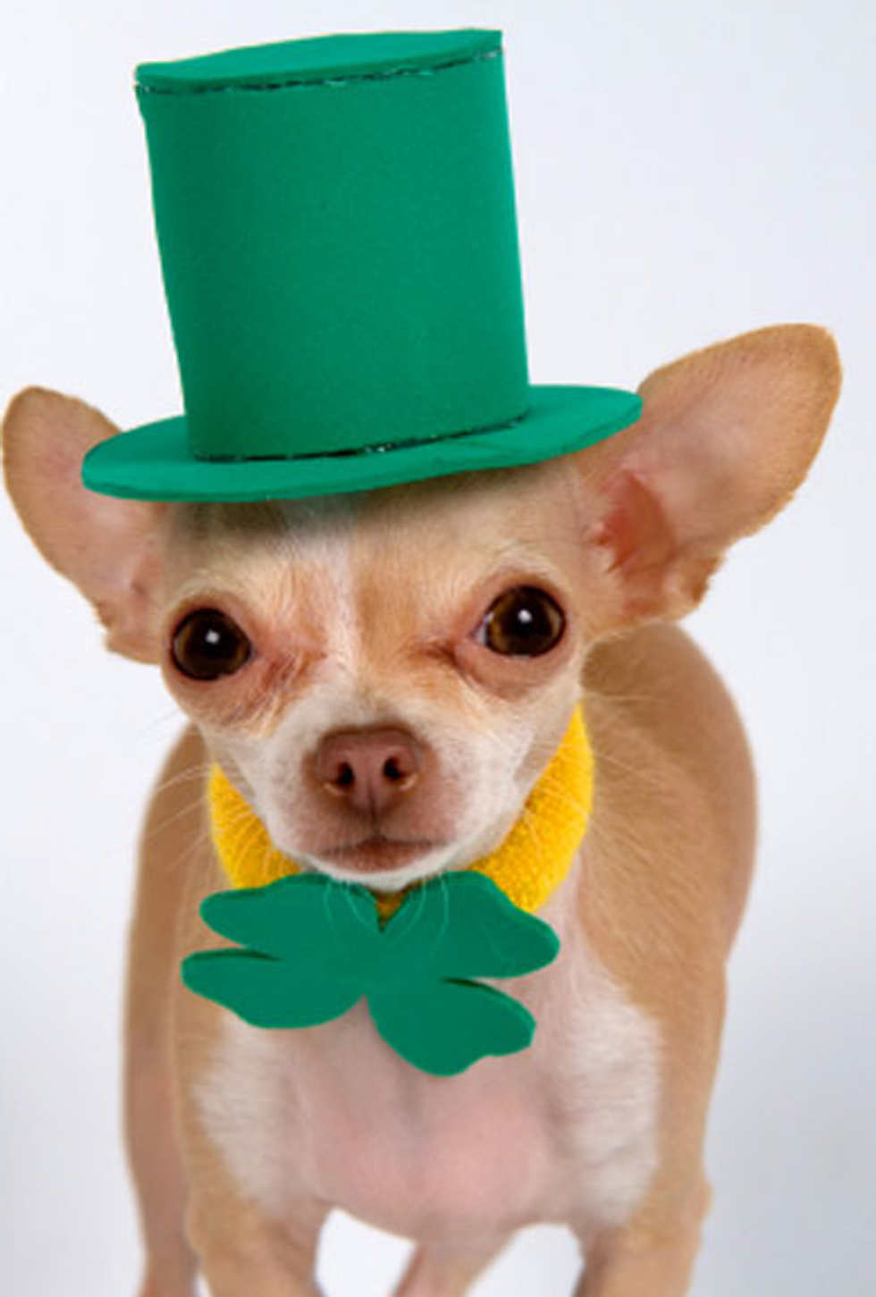 10 Non-Douchey Ways to Celebrate St. Patrick's Day In NYC