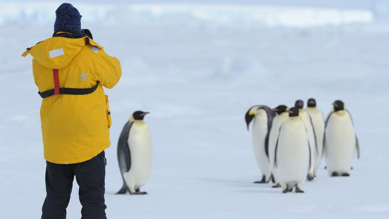 COVID Has Reached Antarctica, and Scientists Are Extremely Concerned for Its Wildlife