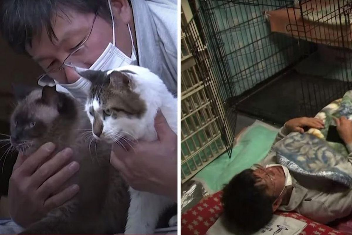 Successful Japanese business man has dedicated his life to saving cats in Fukushima's nuclear zone