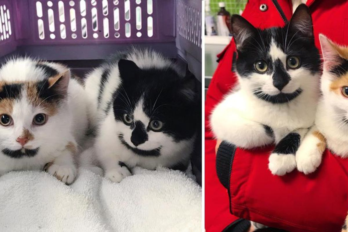 Kittens with Cute Goatees Never Leave Each Other, from Wandering the Streets to Having Dream Come True