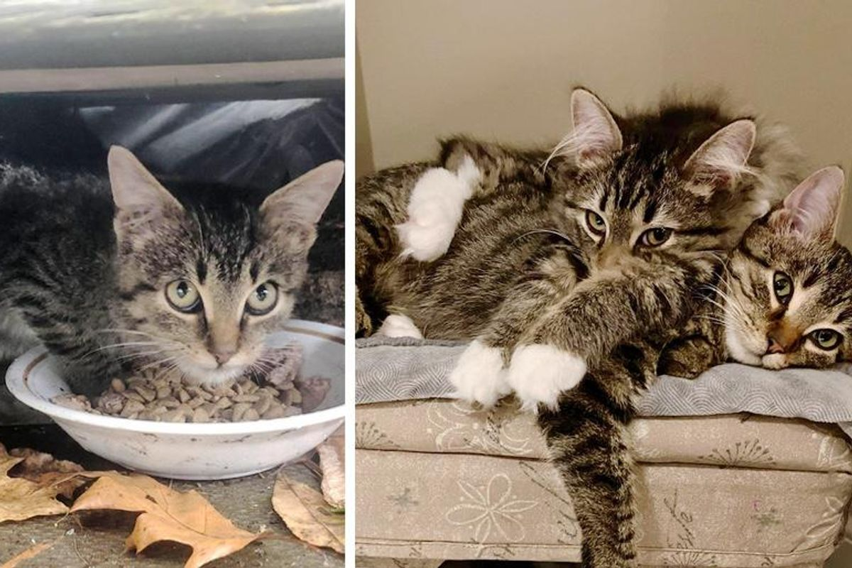Kitten Discovered Hiding Under Porch, Found His Courage Through Another Cat that Needed a Friend