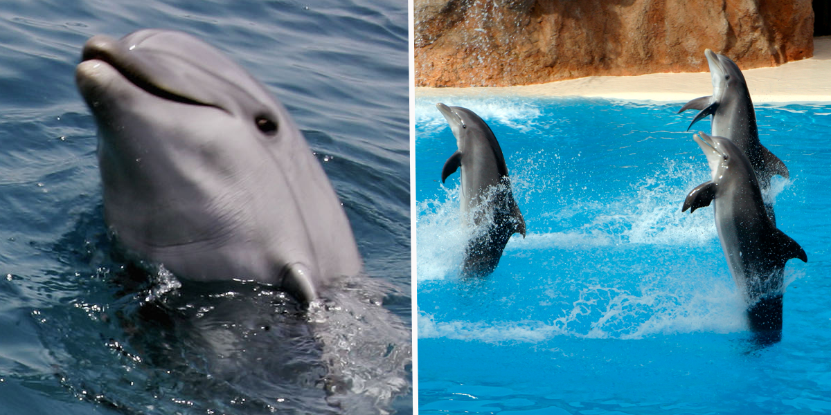 Australian State Bans Dolphin Shows With New Law to End Breeding and Importing Captive Animals