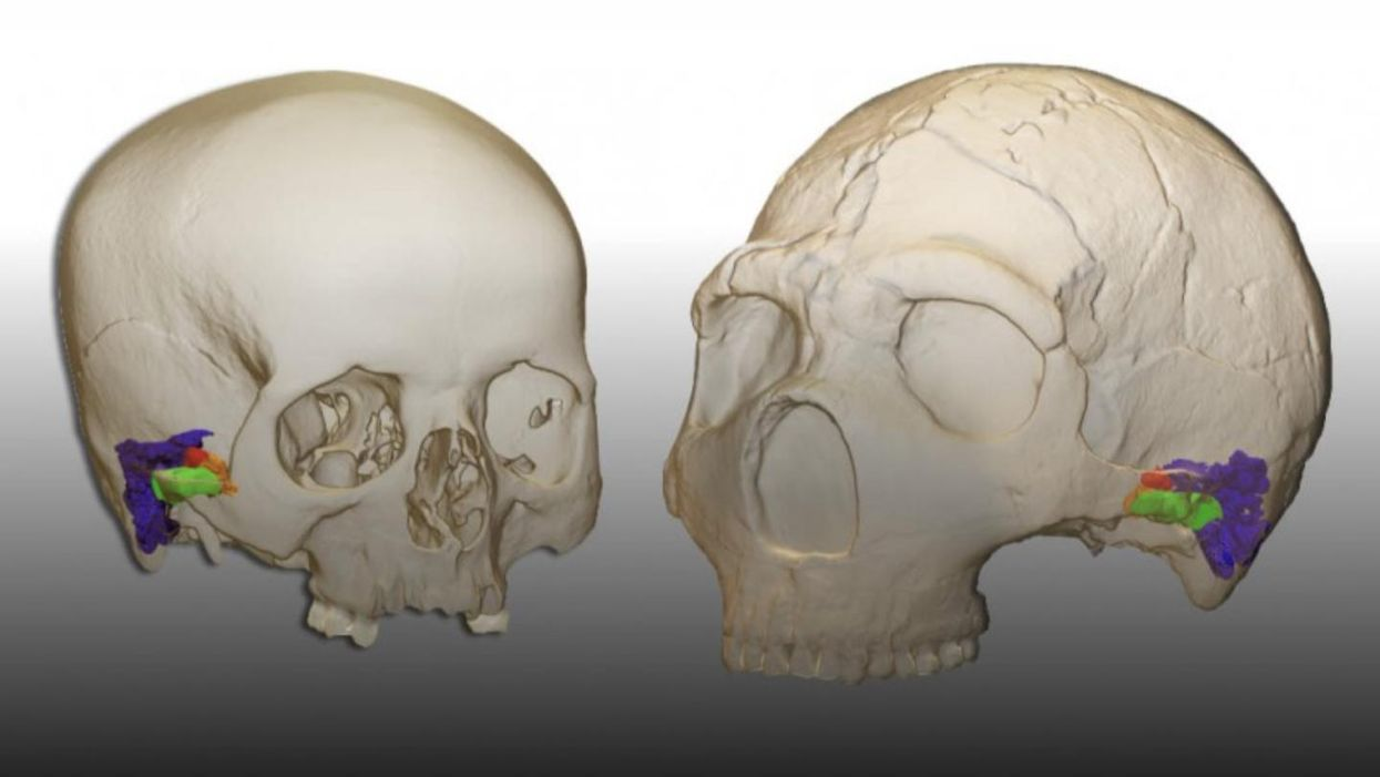 Neanderthals could produce and hear human speech, new study finds