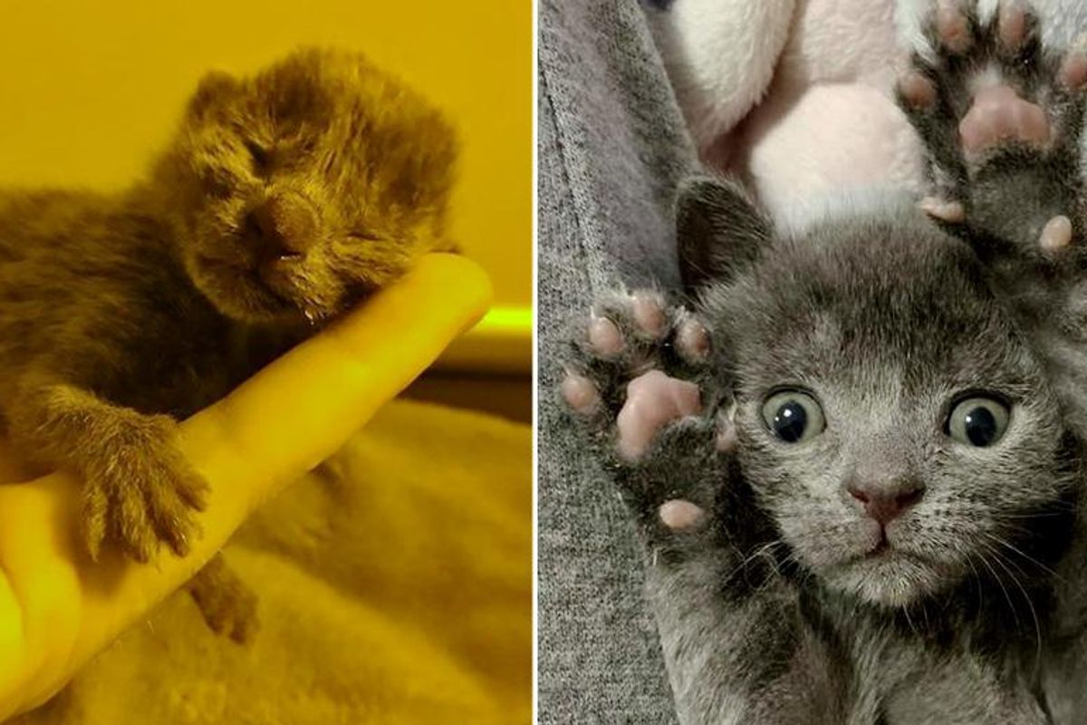 Kitten Left Behind in Flowerpot, Bounces Back on Her Paws and Blossoms Through Kindness of People