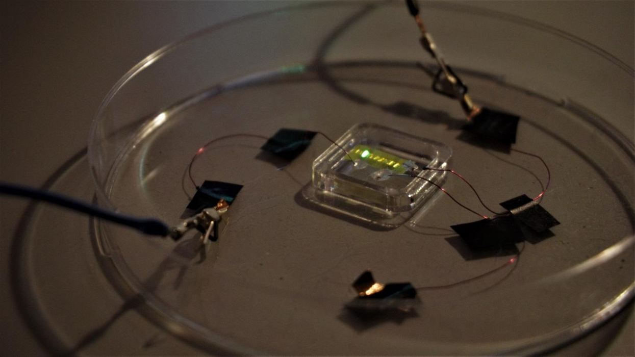 ​These light-emitting  smart  tattoos could act as medical monitors