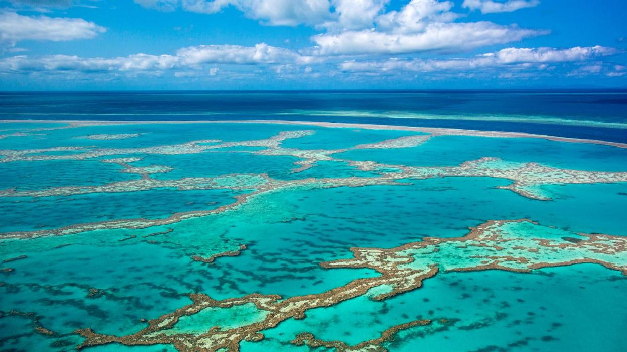 3 Australian Marine Sites Store Billions of Tons of Carbon, New UNESCO Report Finds